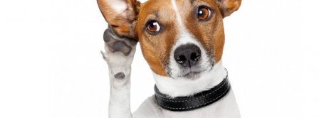 Funny Dog Listening Facebook Covers