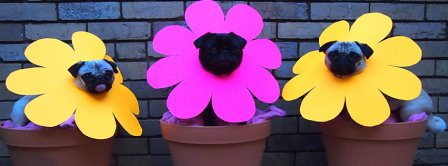 Funny Pugs In Flowers Pots Facebook Covers