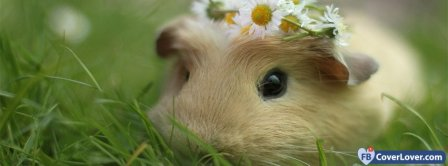 Cute Guinea Pig Facebook Covers