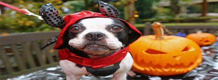 Halloween Dog In Costume Facebook Covers
