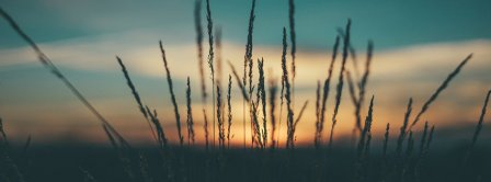 Herbs Sunset Facebook Covers