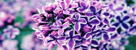 Lilac Facebook Covers