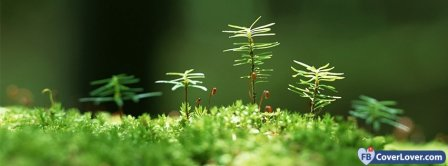 Nature And Moss Facebook Covers