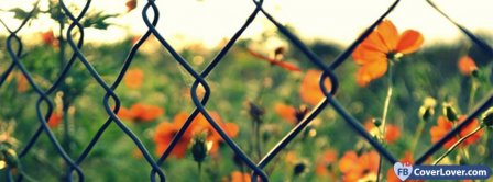 Fence And Poppies Facebook Covers