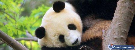 Panda 2  Facebook Covers