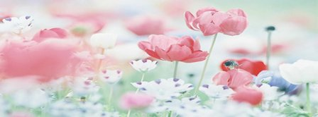 Pastel Poppies Facebook Covers