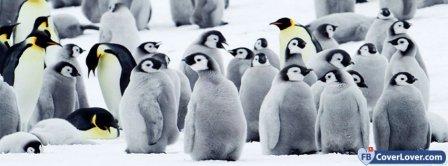Penguin Awareness Day 1 Facebook Covers