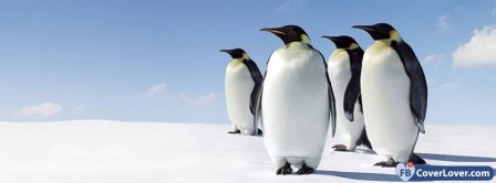 Penguin Awareness Day 2 Facebook Covers