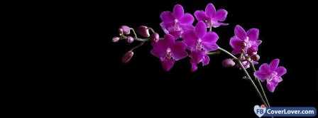 Dark Pink Orchids Facebook Covers