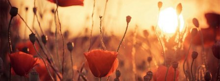 Poppies Flowers At Dawn  Facebook Covers