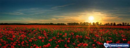 Poppies Flowers Field  Facebook Covers