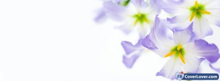 Purple Flowers  Facebook Covers
