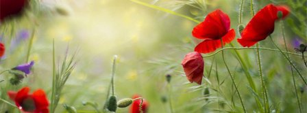 Red Poppies   Facebook Covers