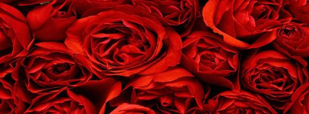 Red Roses Background Facebook Covers