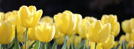 Spring Tulips 2021 Facebook Covers