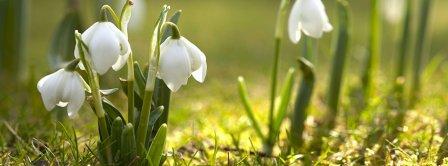 Spring Awakening Facebook Covers