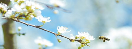Spring Bee Facebook Covers