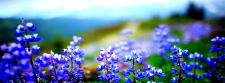 Spring Blossom Facebook Covers
