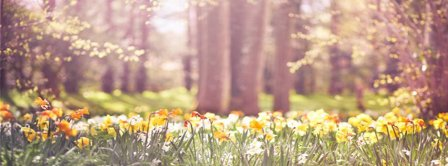 Spring Daffodils Facebook Covers
