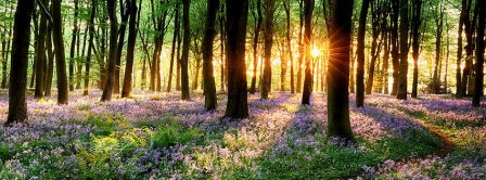 Spring Forest Sunset Facebook Covers