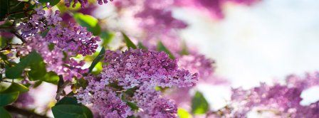 Spring Lilacs Facebook Covers