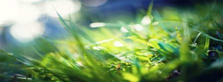 Spring Macro Green Grass Facebook Covers