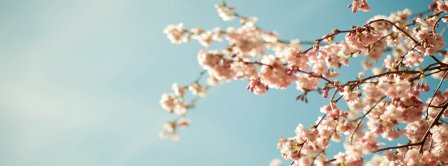 Spring Sakura Spring Facebook Covers