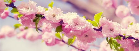 Spring Time Sakura Facebook Covers