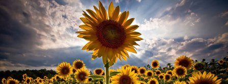 Sunflower Facebook Covers