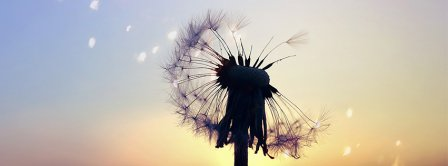 Sunset Dandelion Facebook Covers