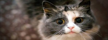 Teary Eyes Cat Facebook Covers