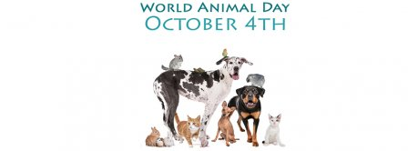 World Animal Day October 4th Facebook Covers