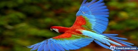 Amazing Color Parrot Facebook Covers