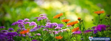 Beautiful Colors Flowers  Facebook Covers
