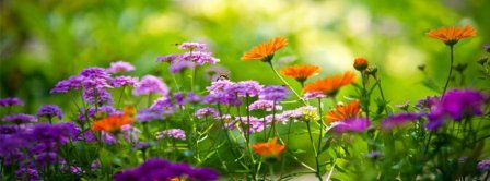 Beautiful Color Flowers Facebook Covers