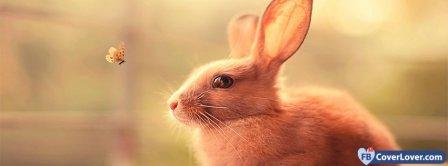 Cute Bunny Facebook Covers