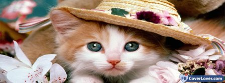 Cat With Hat  Facebook Covers