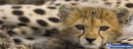 Cheetah Baby Facebook Covers