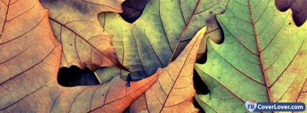 Colorful Leafs  Facebook Covers