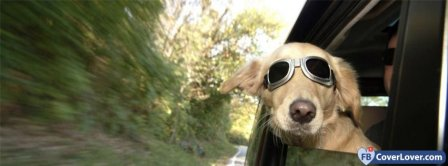 Cool Dog With Glasses  Facebook Covers