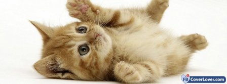 Cute Cat 2  Facebook Covers