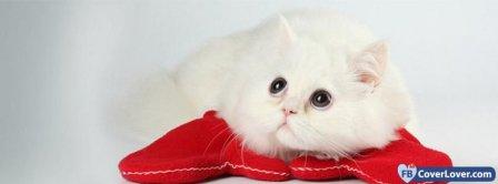 Cute White Cat Facebook Covers