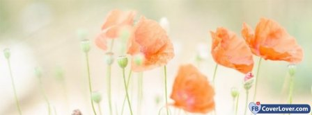 Flowers Poppies Facebook Covers