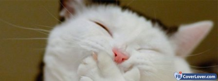 Funny Cat Facebook Covers