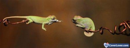 Green Lizards  Facebook Covers