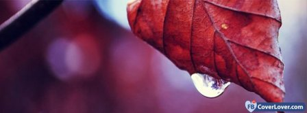Leaf And Droplet Facebook Covers