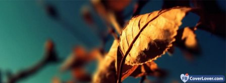Autumn Leafs Facebook Covers