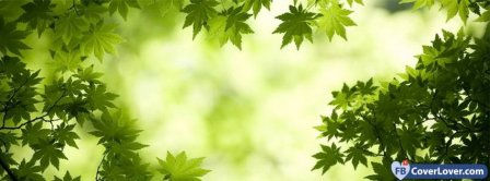 Maple Leaves Facebook Covers