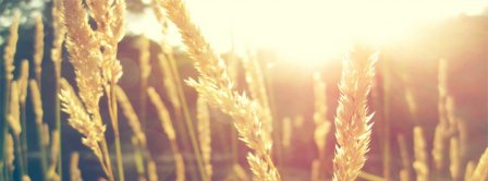 Nature Sun Wheat Facebook Covers