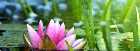 Pink Water Lily Flower Facebook Covers